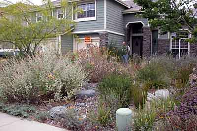 From lawn to a native landscape ... - California Native Landscapes - Past Installations
