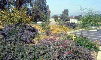 Colorful, chapparral garden